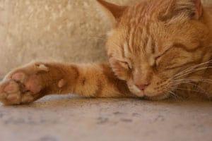 5 ungewöhnliche Tipps für einen besseren Schlaf