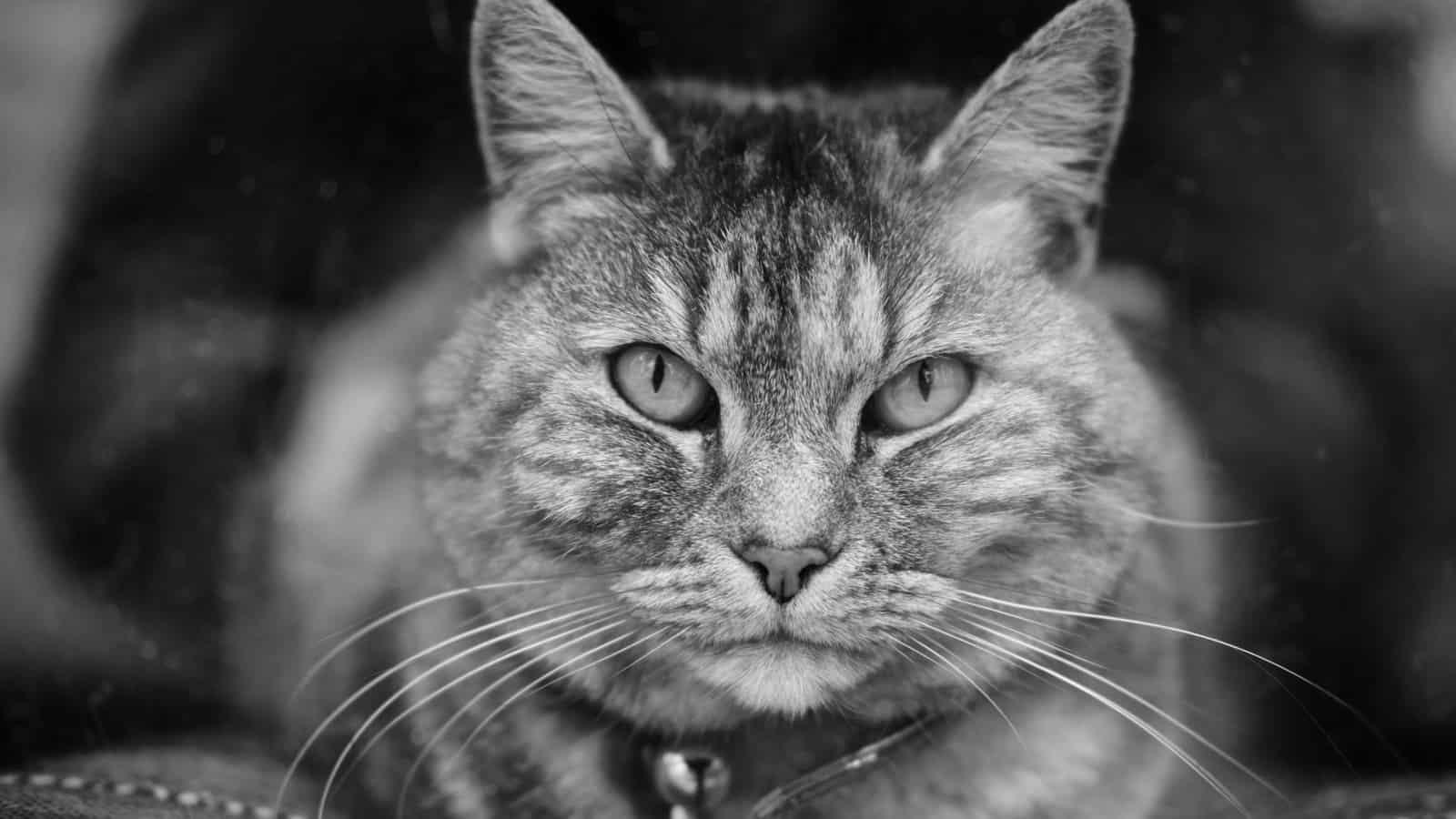 Sei wie eine Katze – mit Fokus zum Ziel