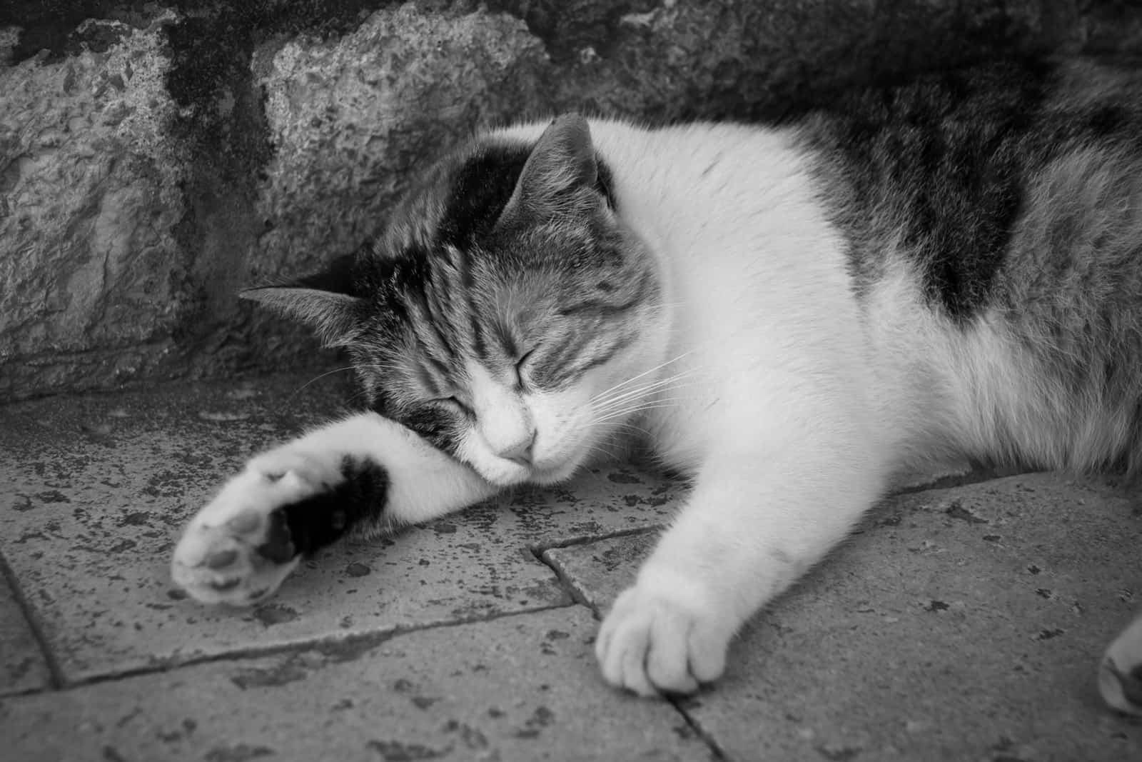 Der Schlaf der Produktiven